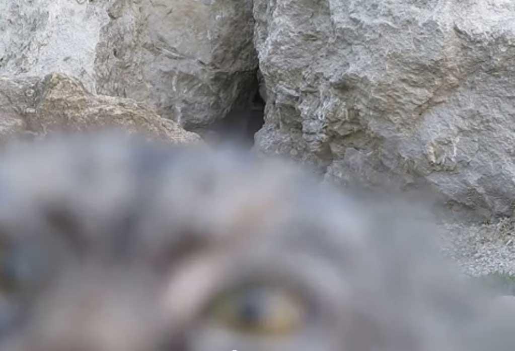 Secrets and cats