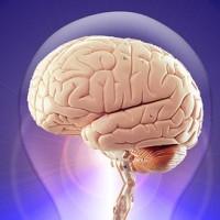 A brain inside a light bulb