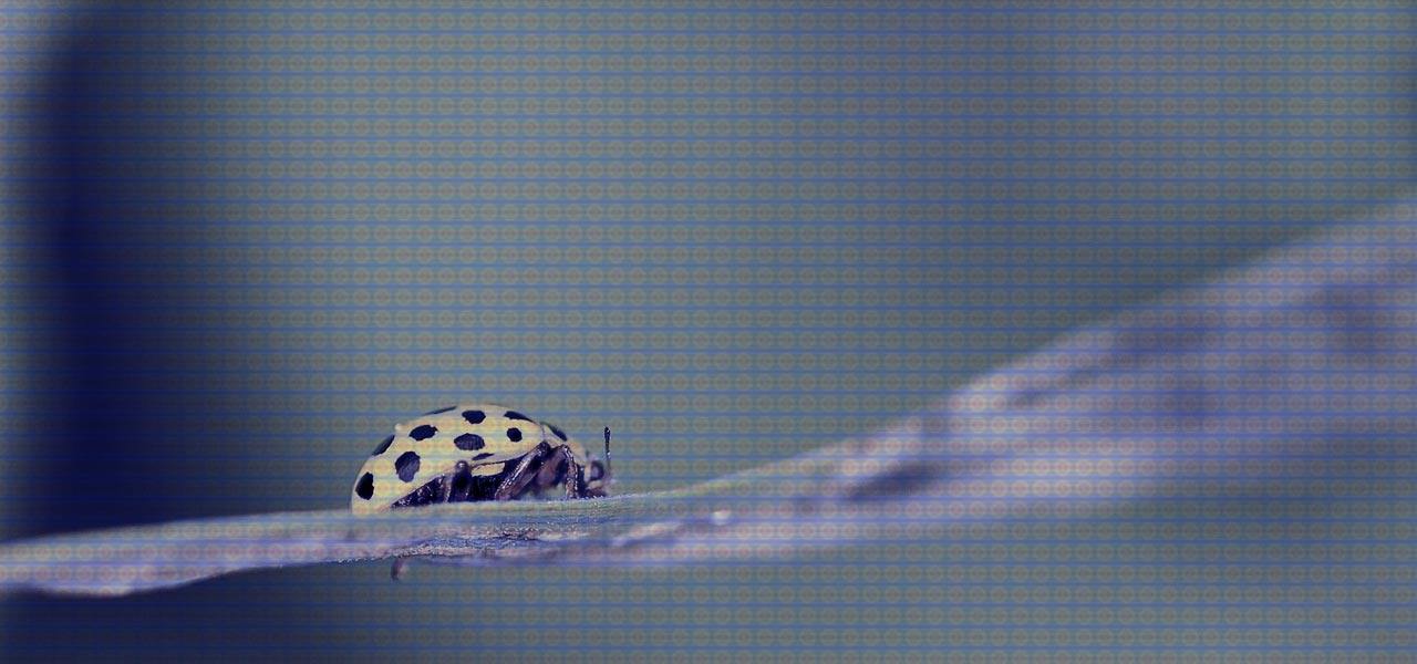 A ladybug crawls slowly along a leaf: encryption bugs.
