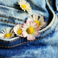 A picture of a jeans front pocket with daisy flowers sticking out of the pocket